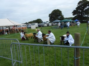Great Day For The Gillingham And Shaftesbury Show