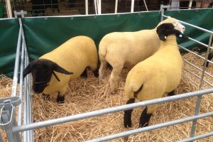 DAY AT THE GILLINGHAM AND SHAFTESBURY SHOW